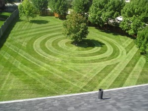 best lawn care service