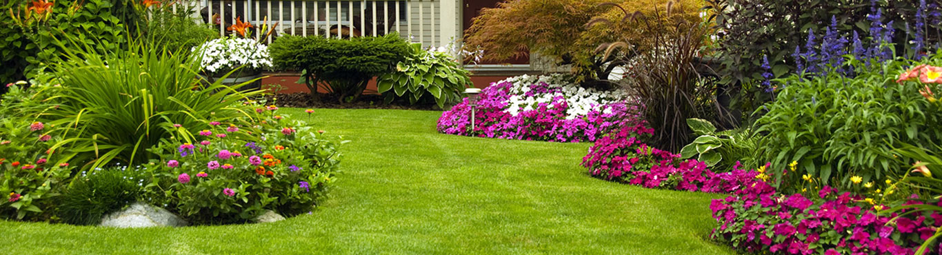 Top Cut Lawn Care Service